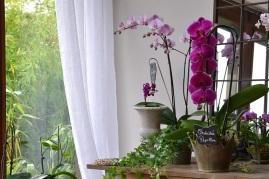 papillon-orchidee