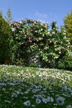 pelouse fleurie