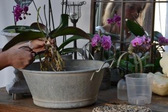 racines d'orchidée