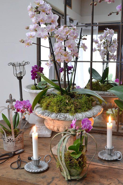 vase-orchidee