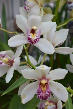 Fleurs d'orchidée
