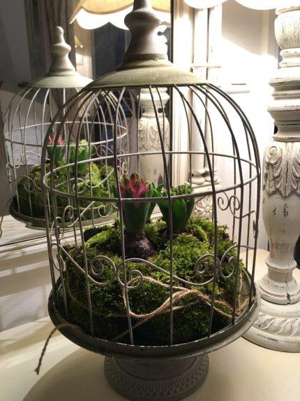 Plantation de jacinthes dans une cage