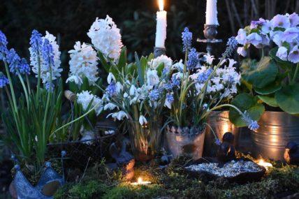 Jacinthes, muserais et perce-neige