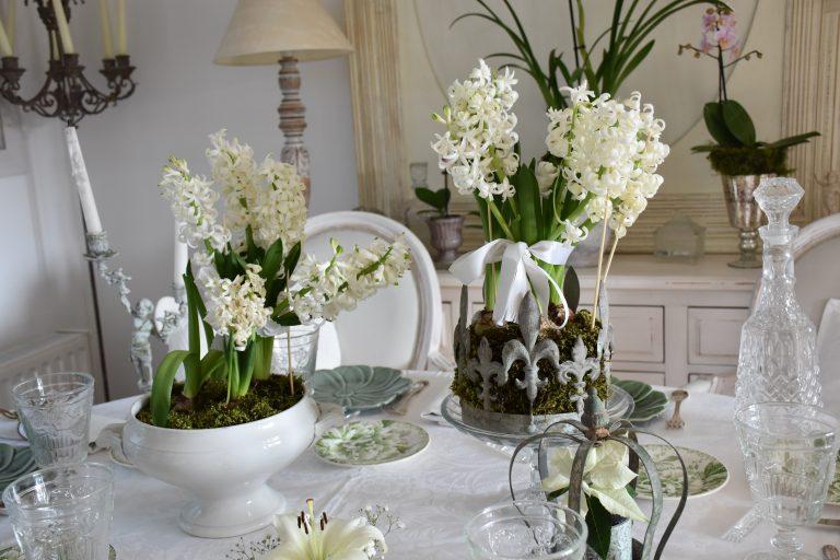Potées de jacinthes blanches