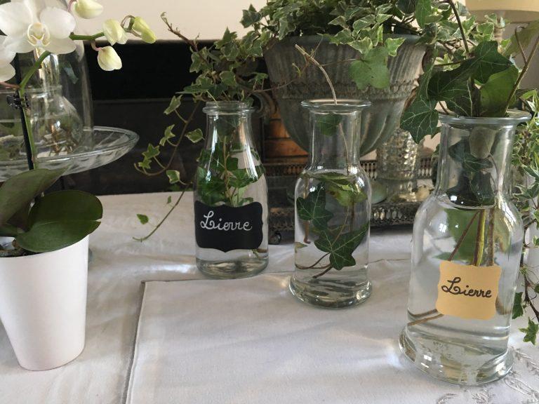vases avec du lierre