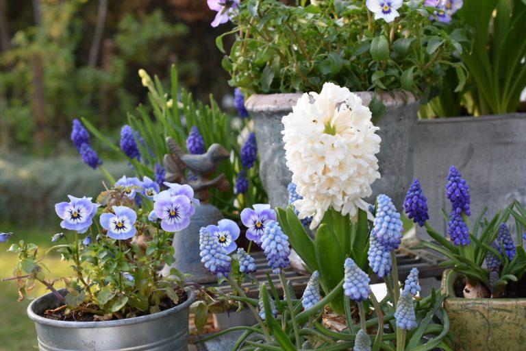 Le printemps en pots