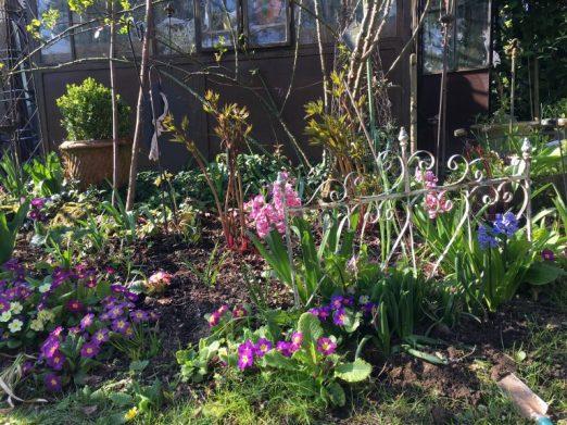 Printemps: jacinthes et primevères