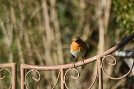 barriere-robin