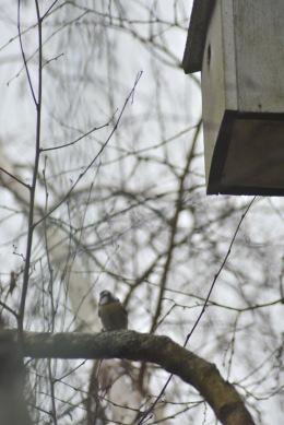 cherche-nid