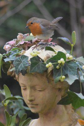 Aurore amie des oiseaux