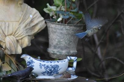 envol-blue-mesange