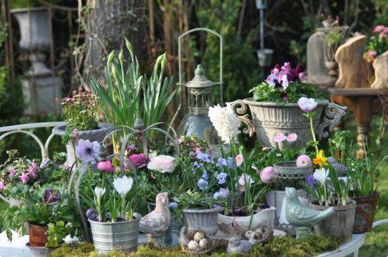 profusion de fleurs de printemps