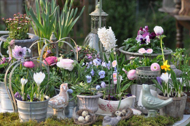Fleurs de printemps dont jacinthes