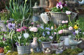 fleurs de printemps jacinthes