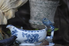 mesange-bleue-dos