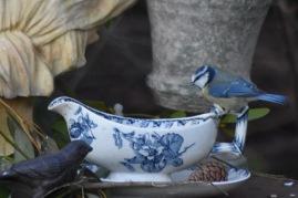 mesange-sauciere-bleue