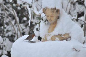 Sous la neige, Aurore au rouge-gorge