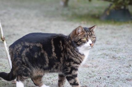 nouga-chat