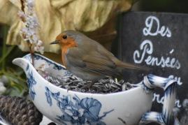 plumage-rouge-gorge