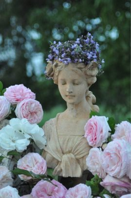 Sauge et roses pour Flore