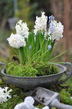 Soupière de jacinthes et muserais