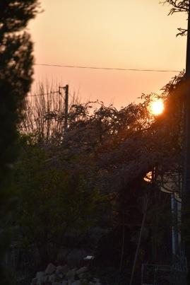 coucher-soleil-glycine