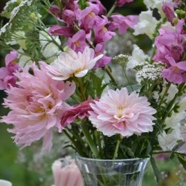 bouquet de Dahlia