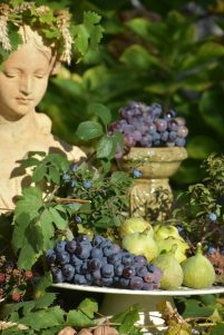 raisins Flore