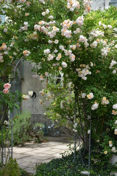 arche de roses Ghislaine de Féligonde