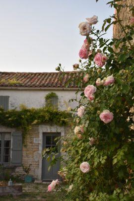 façade roses