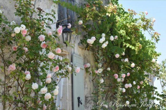 Roses entourant la porte